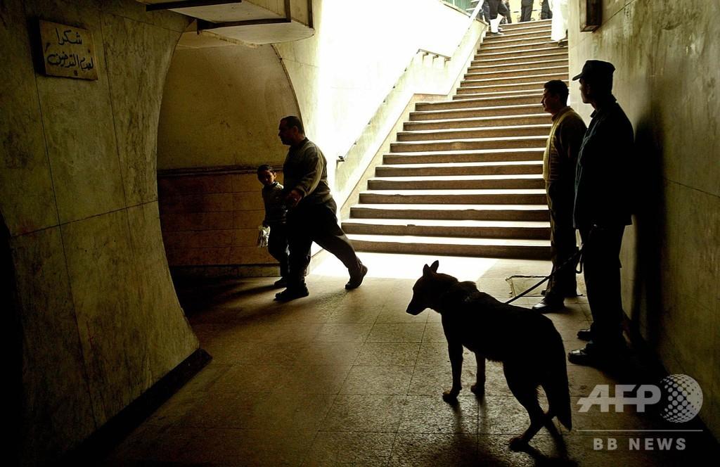 中東で米爆弾探知犬死ぬ例相次ぐ、派遣を一時中止
