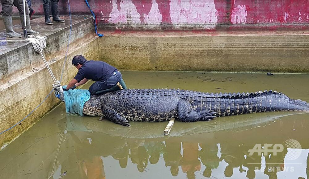 50d46ea8f7d2 はてなブックマーク - 体長4mのペットのワニに襲われた女性が死亡 インドネシア 写真2枚 国際ニュース:AFPBB News