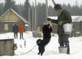 ベラルーシのイヌ、寒さに負けず特訓中