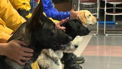 動画:台湾地震で初出動の救助犬がお手柄、行方不明者の捜索に貢献