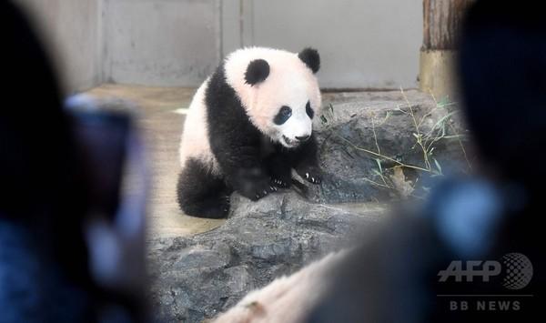 上野動物園「シャンシャン」、一般公開始まる