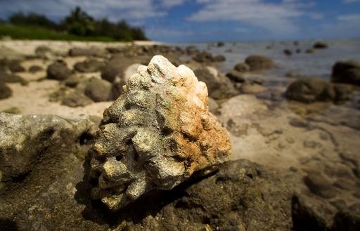 月の面積と同サイズ、太平洋で進む壮大な海洋保護公園計画