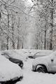 欧州各地で氷点下20度を記録、8人が凍死