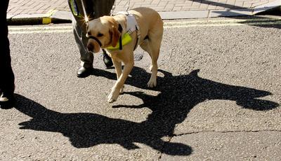 英国で活躍する障害者補助犬、視聴覚支援からてんかん発作の警告まで