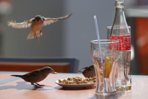 騒音がスズメの寿命を縮める?実験結果