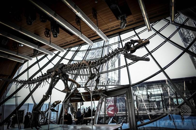 極めて珍しい肉食恐竜の骨格、約2億6000万円で落札 仏パリ
