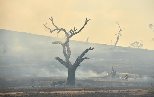 国内森林の5分の1が焼失、オーストラリア 研究