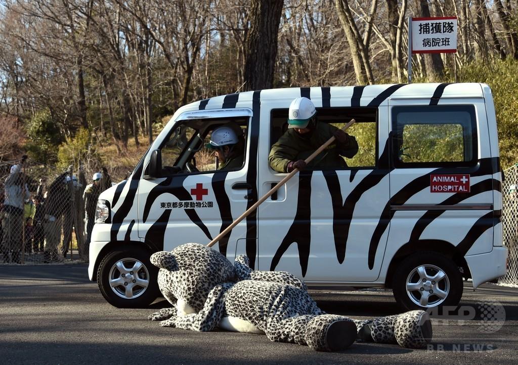 今年は「ユキヒョウ」脱走、多摩動物公園で捕獲訓練