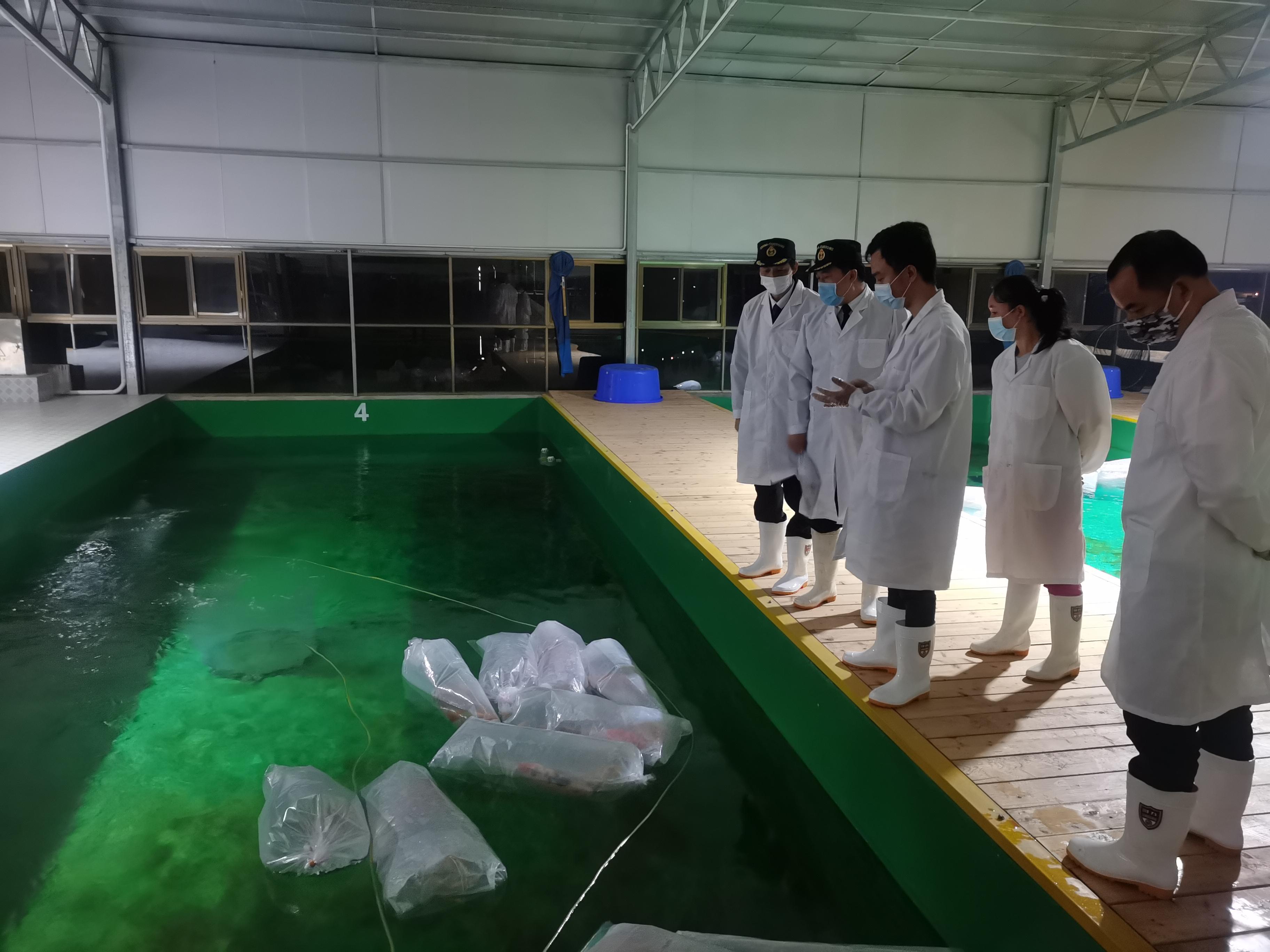 日本のニシキゴイ290匹が長沙に到着 隔離検疫後に市場へ