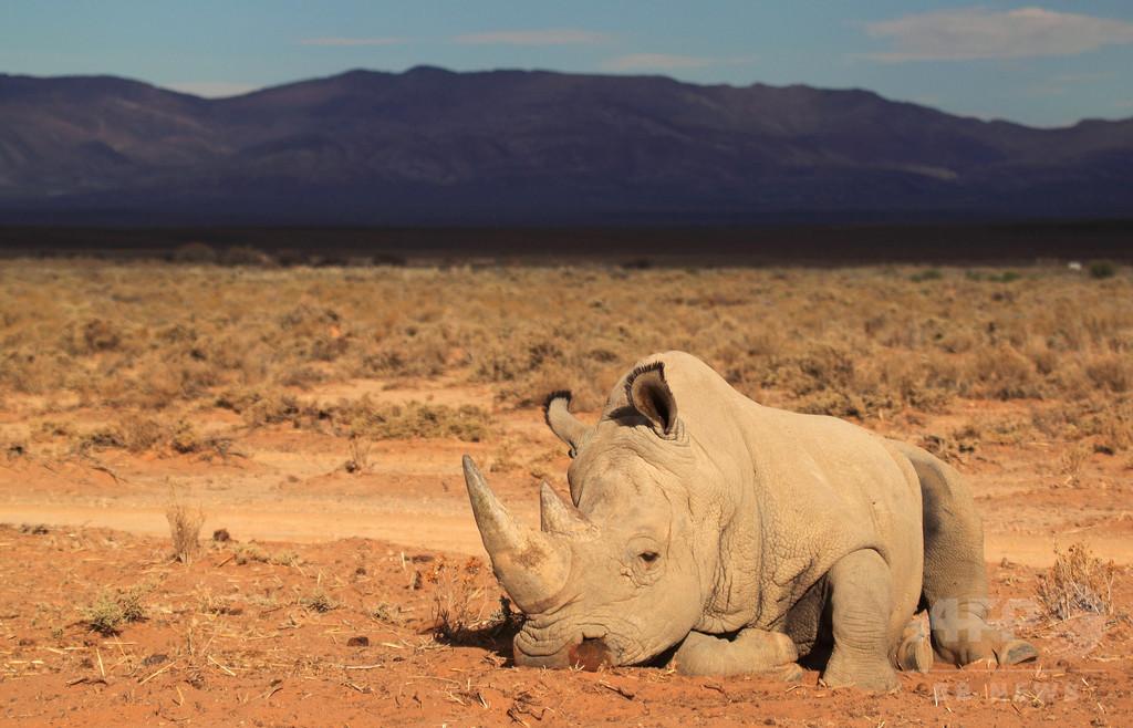 南アでサイの密猟が増加、2014年は過去最悪の1215頭