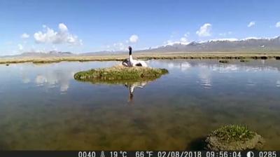 動画:絶滅危惧種オグロヅルのふ化 カメラが捉える
