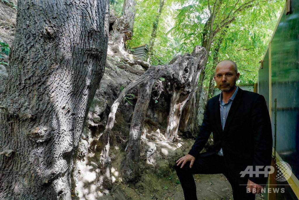 ゴッホ最後の作品「木の根と幹」 描いた場所を特定