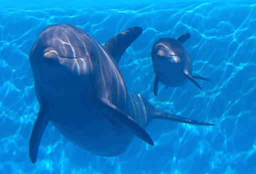 メキシコ湾のイルカに健康異常、2010年原油流出事故後に