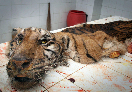 インドネシア最大の動物園で数百匹が死ぬ、経営陣対立で放置