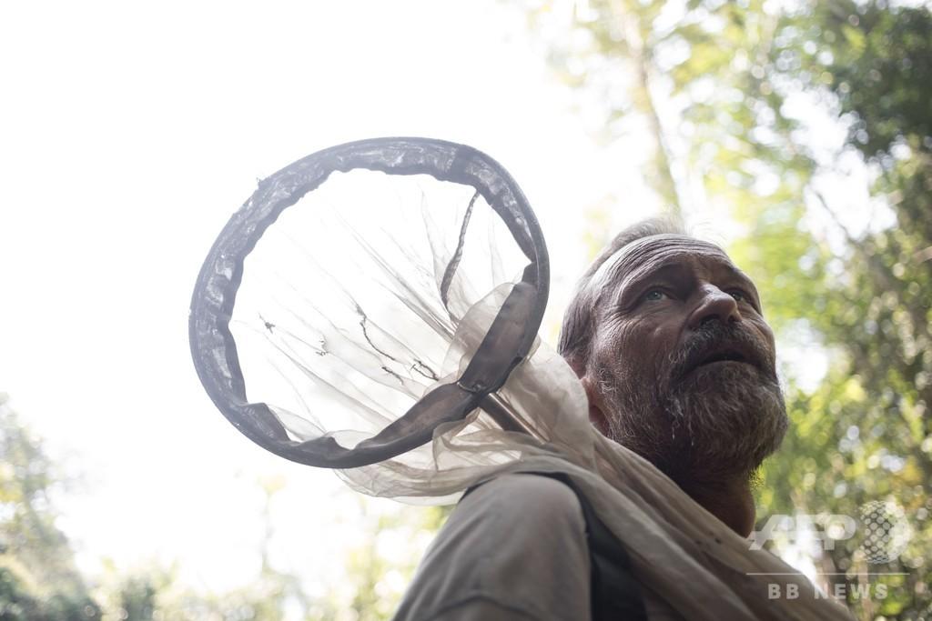 巨大なチョウのミステリー、仏遠征隊が調査 中央アフリカ