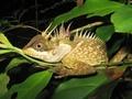メコン川流域で新種163種確認、虹色の頭をもつヘビも