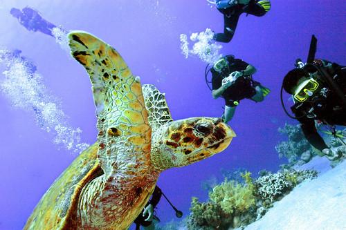 スキューバダイビング潜水深度の世界記録を更新、エジプト
