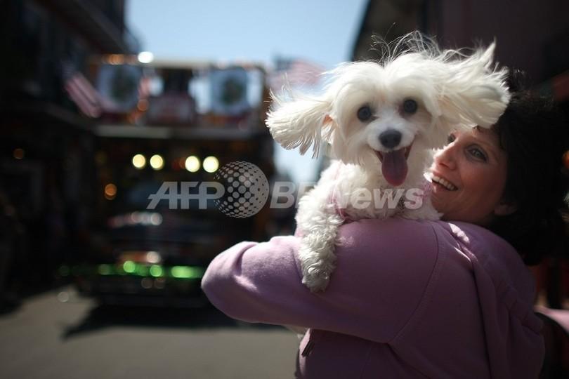 ペット愛好家もエコ志向へ、注目はオーガニックフード 米国