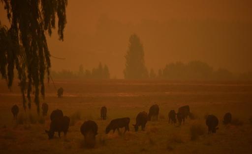 豪州南部で40度超え、熱波と気温上昇で森林火災悪化の恐れ