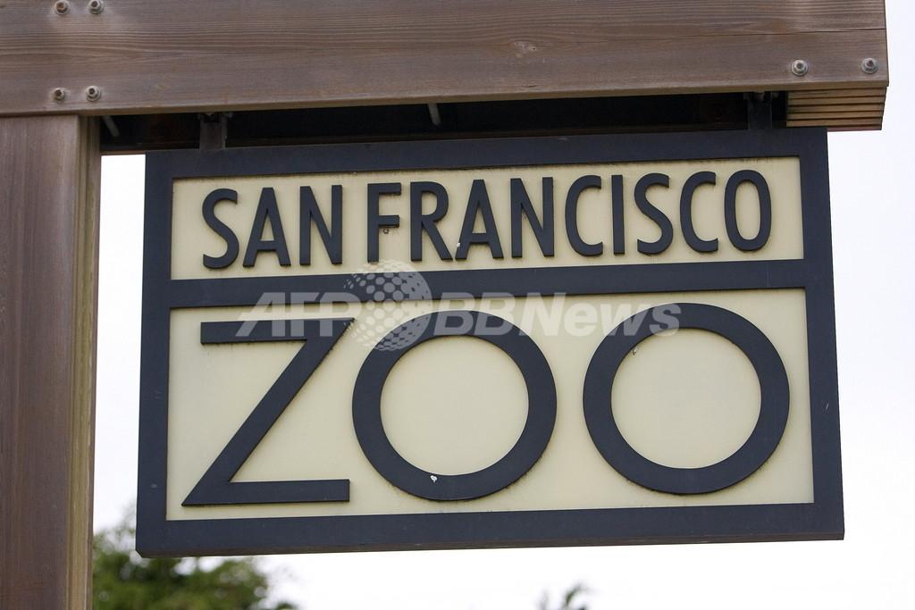 米動物園のトラによる殺傷事件、囲いの中に靴跡が見つかる