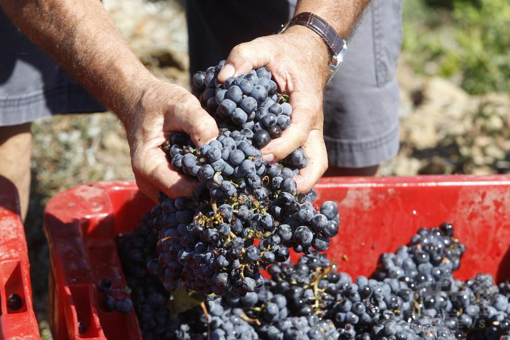 在仏の日本人ワイン農家夫婦に退去命令 「恥ずべき決定」に抗議の署名殺到