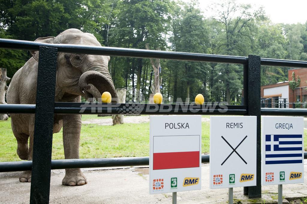 インド象のチッタ、欧州選手権の開幕戦はポーランドの勝利を予想