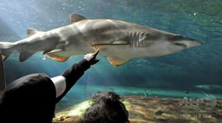 米女性、腕にかみついたサメごと病院へ フロリダ州