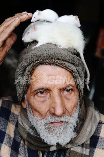 インドの商店主、60年間で助けた動物は数百匹