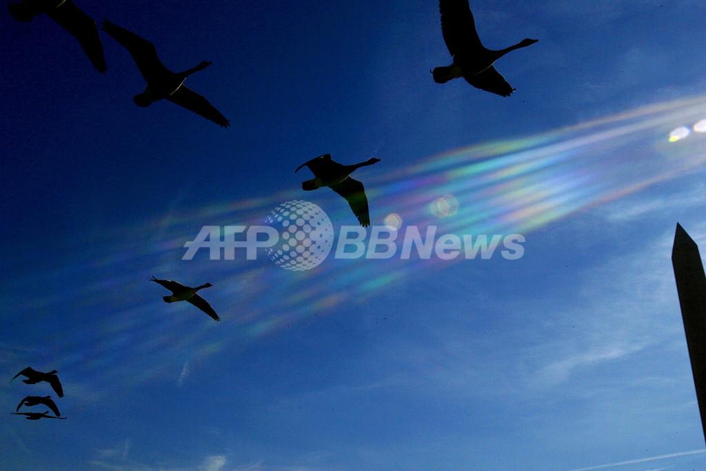 渡り鳥は栄養価の高い果実を知っている、米大研究