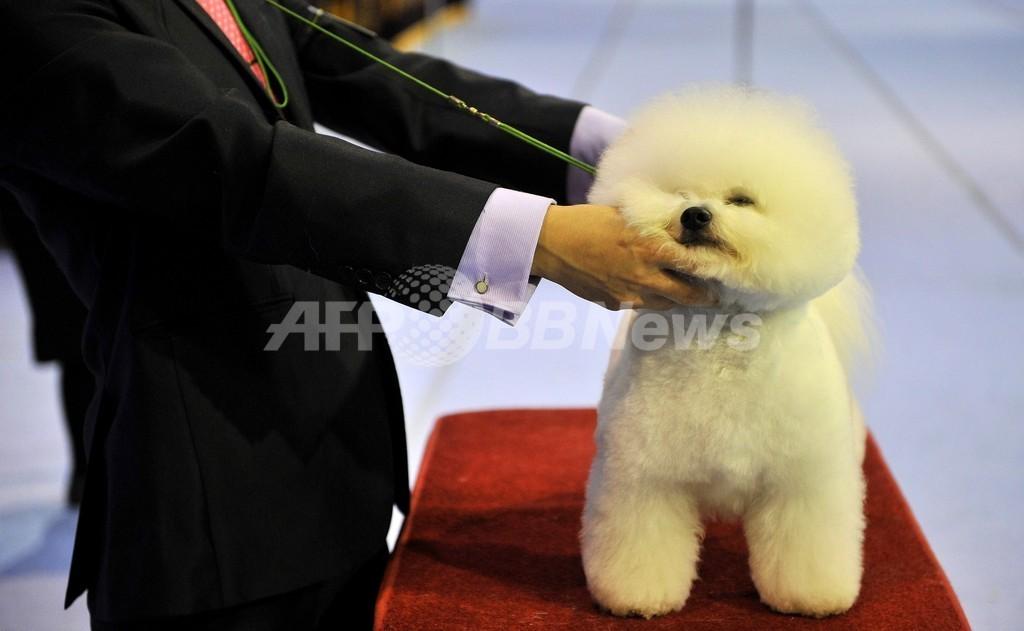 「ソウルFCI国際ドッグショー」開催