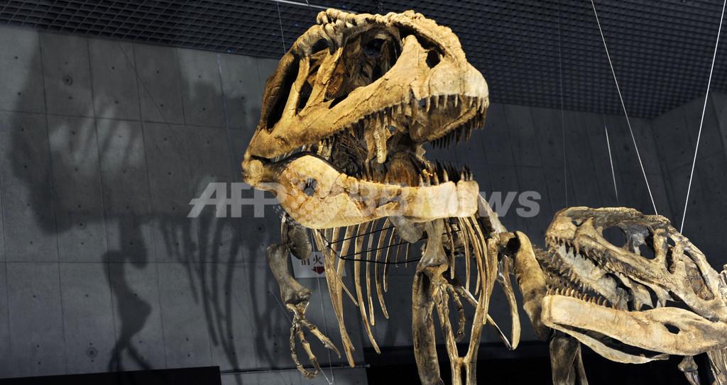 「大恐竜展」国立科学博物館で14日から