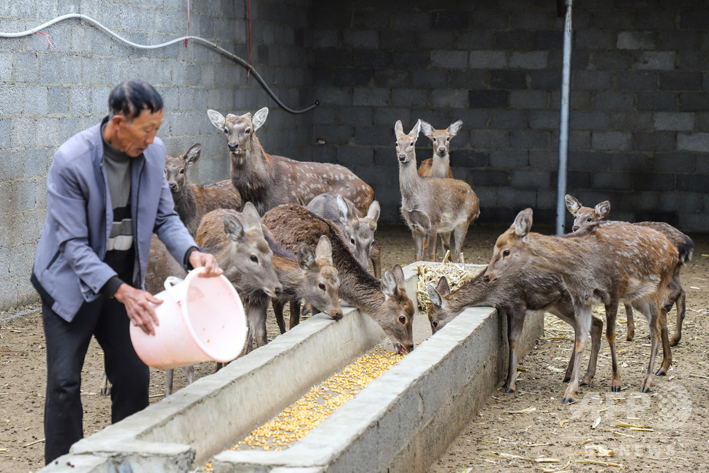 野生動物の食用禁止、飼育業者と動物の運命は? 中国