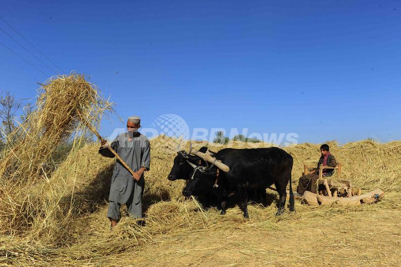 地球温暖化ガスの14.5%、家畜に由来 FAO報告書