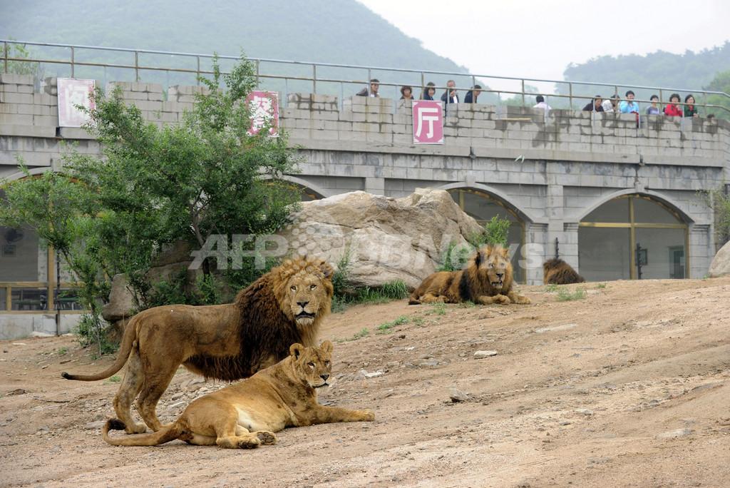 ようやく動物保護法の制定に着手、動物園の「劣悪環境」有名な中国