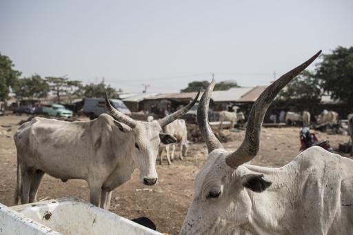 村の自警団が「盗賊」59人殺害 ナイジェリア北西部