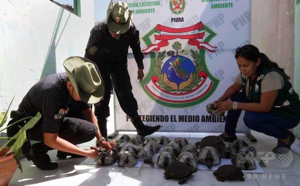 ガラパゴス諸島のゾウガメをペルーで保護、密輸の疑い