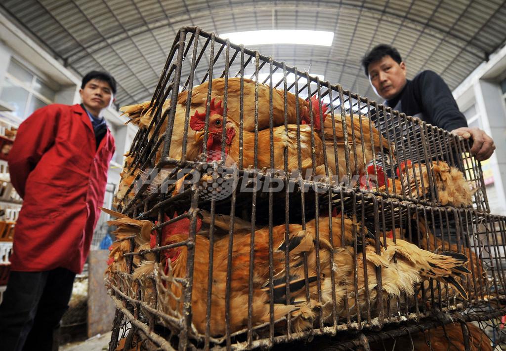 中国の鳥インフルエンザ感染拡大、家禽業が「壊滅的」打撃