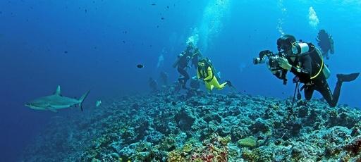 サメの乱獲でサンゴ礁破壊が深刻化、豪研究