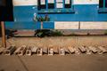 マダガスカルでペスト流行、死者30人に 都市部に拡大 市民パニック