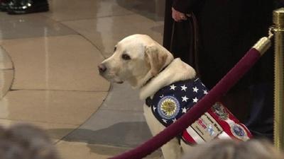 動画:故ブッシュ大統領の介助犬、ひつぎの付き添い「任務完了」