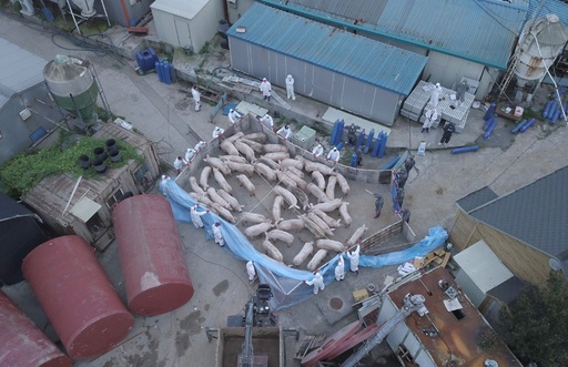 韓国、4例目の豚コレラ感染確認 北朝鮮に協力呼び掛けも返答なし