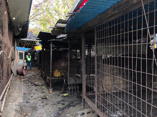 韓国最大の犬の食肉処理施設、解体始まる 犬食への非難高まる中