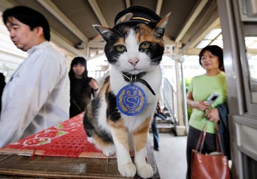 和歌山の猫駅長「たま」死ぬ、16歳