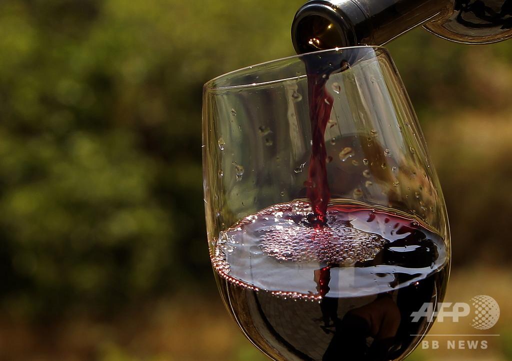 赤ワイン摂取で腸内細菌叢の多様性が増大 英研究
