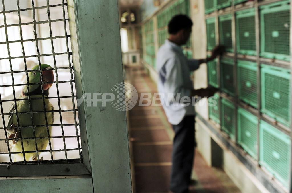 治療費無料の「鳥の病院」、運営方針はジャイナ教 インド