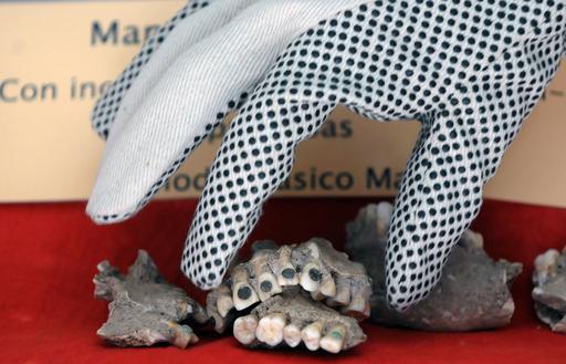 盗まれた古代マヤ人の上あご戻る、歯にヒスイの埋め込み