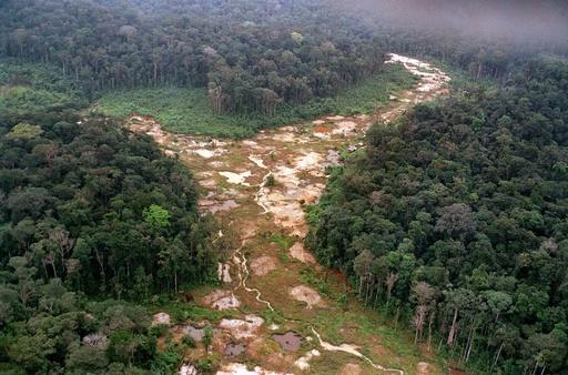 20年1月のアマゾン森林破壊、前年同月比2倍に拡大 ブラジル