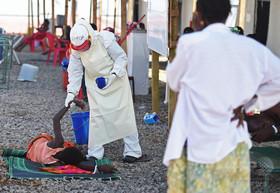 アジア産のハーブ抽出成分、エボラウイルスに有効か 研究