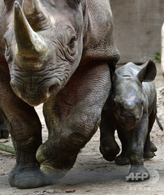 2歳児がサイと接触し負傷、米フロリダの動物園
