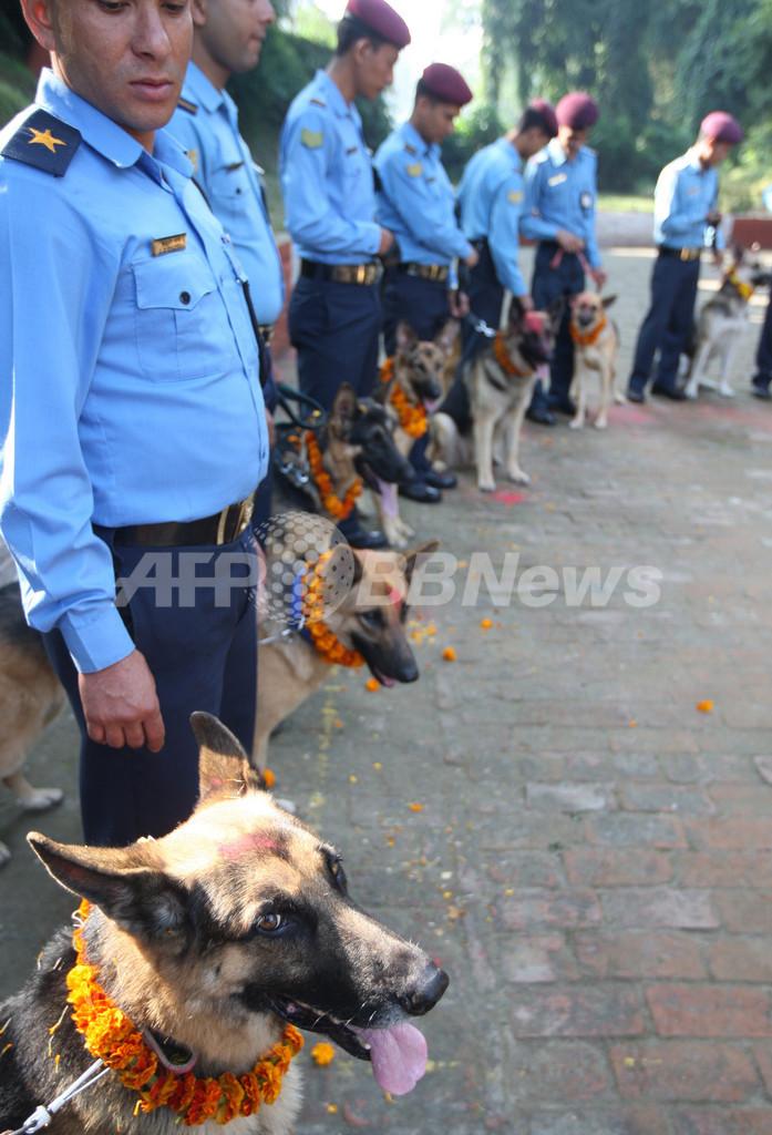 ヒンズー教光の祭り「ティハール」、犬を花輪で祝福 ネパール